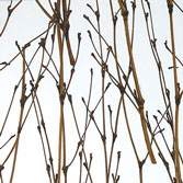 AW-0708 Twigs SS - Translucent Materials
